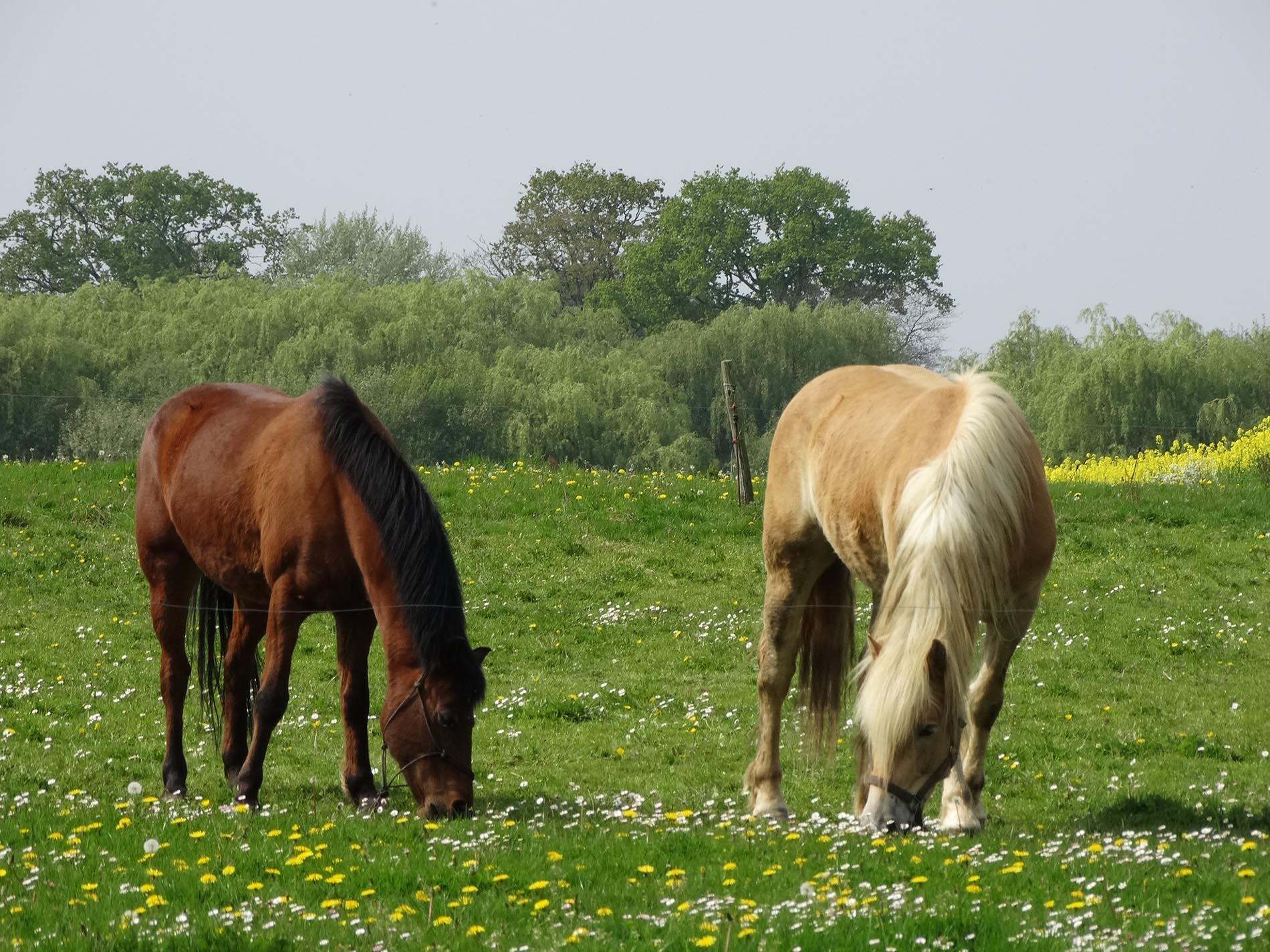 pension pour chevaux g te au sud de rennes. Black Bedroom Furniture Sets. Home Design Ideas